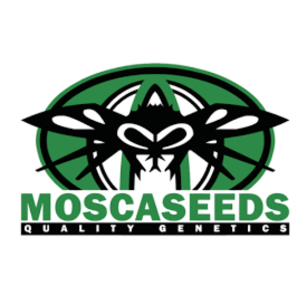 Mosca Seeds Pinky Blinders Limited Ed. Reg 10 pk