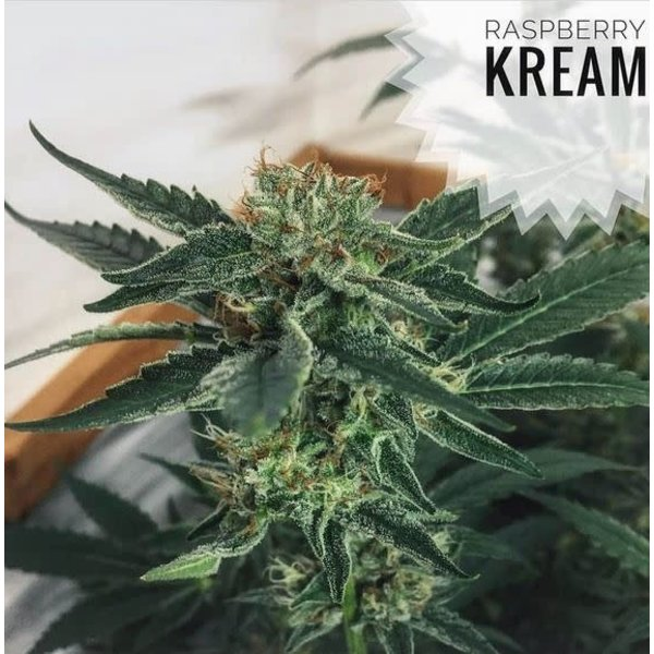 Kre8 Raspberry Cream Reg 5 pk