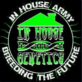In House Genetics In House Genetics Grandma's Kush 10 pack