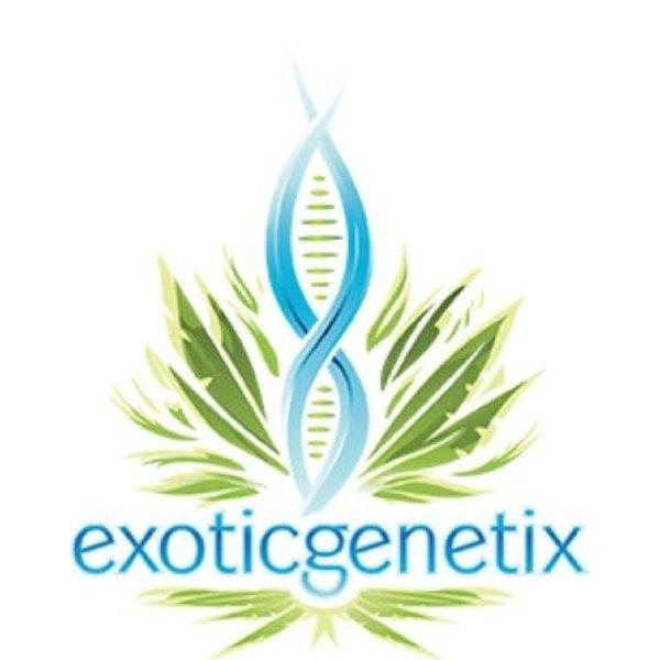 Exotic Genetix Gjallahorn Reg 10 pk