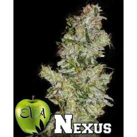 EVA Nexus Fem 5 pk