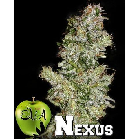 Nexus Fem 5 pk
