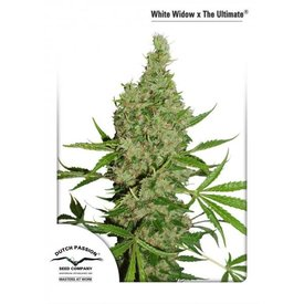 Dutch Passion White Widow x the Ultimate Reg 5 pk