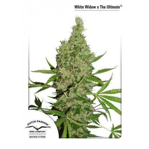 White Widow x the Ultimate Reg 5 pk