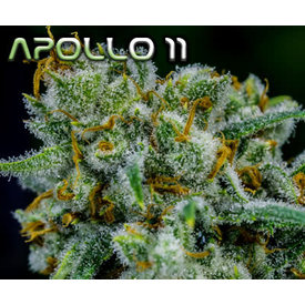 Brothers Grimm Apollo 11 Reg 12 pk