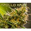 Apollo Haze Reg 12 pk