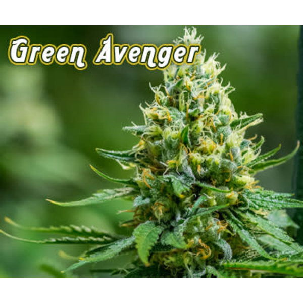 Brothers Grimm Green Avenger Reg 12 pk