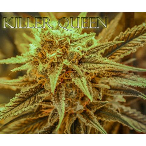 Brothers Grimm Killer Queen Reg 12 pk