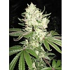 Cali Connection Corleone Kush Reg 10 pack