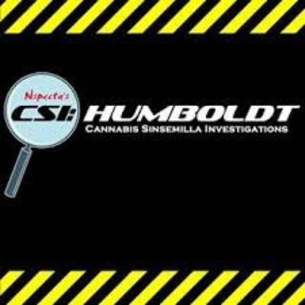 CSI-Humbolt/Bubba Kush CSI-Humbolt/Bubba Kush Black Bubba Fem 11pack