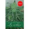 Lovelace Reg 10 pk