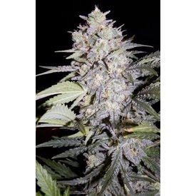 Mephisto Mephisto- Artisanals Sour Livers Auto 7 pack