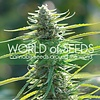 World of Seeds Colombian Gold Fem 7 pk