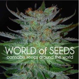 World of Seeds World of Seeds New York 47 Fem 7 pack