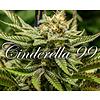 Brothers Grimm Cinderella 99 Reg 12 pk
