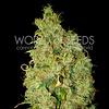 World of Seeds Northern Lights x Skunk Fem 7 pk