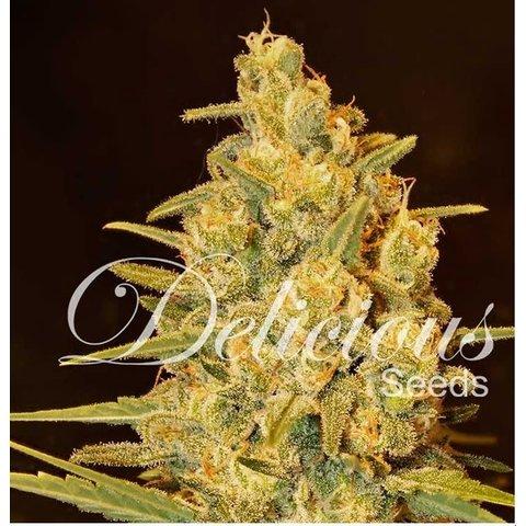 Delicious Seeds Critical Sensi Star Fem 5 pk