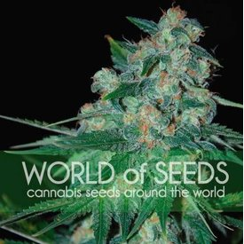 World of Seeds Ketama Fem 7 pk