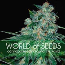 World of Seeds World of Seeds Ketama Fem 7 pack