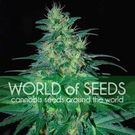 World of Seeds South African Kwazulu Fem 7 pk