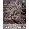 JackPot Royale Reg 10 pk