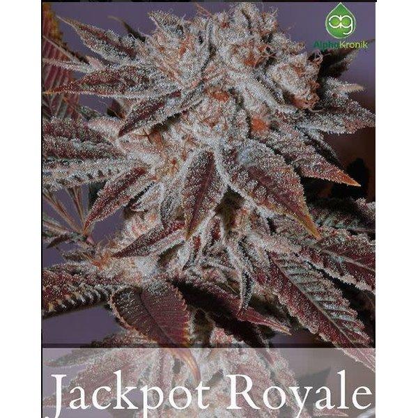 Alphakronik JackPot Royale Reg 10 pk