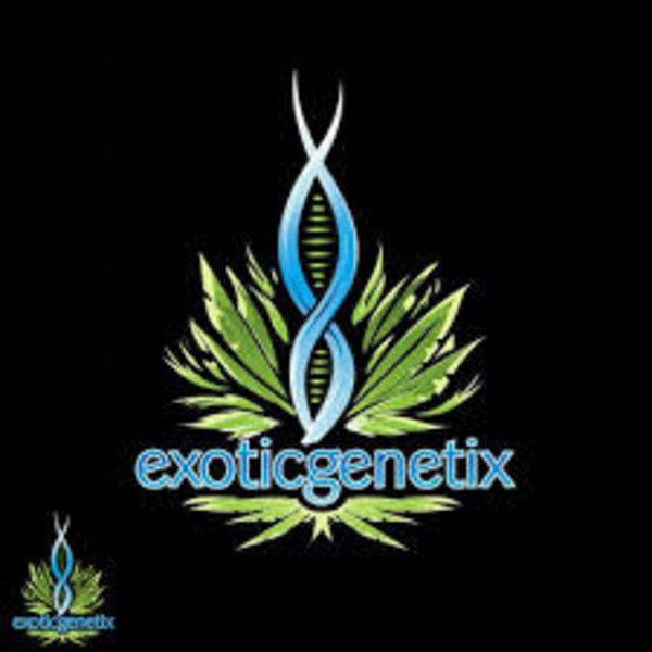 Exotic Genetix Lime OG Reg 10 pk