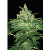 World of Seeds Afghan Kush Early Version Fem 7 pk