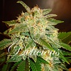 Delicious Seeds La Bella Afrodita Auto Fem 5 pack
