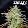 Delicious Seeds Marmalate Early Version Fem 5 pack