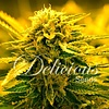 Delicious Seeds Sugar Black Rose Auto Fem 5 pack