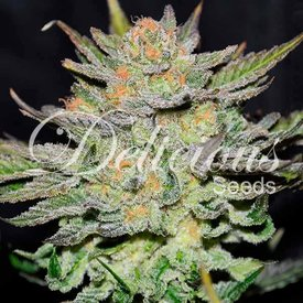 Delicious Seeds Auto Blue Ace CBD Fem 5 pk