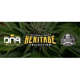 Crockett/DNA Heritage Collection Cough Drops Fem 6 pk