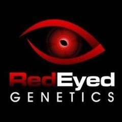 Red Eyed Genetics