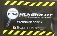 CSI-Humboldt/Bubba Kush