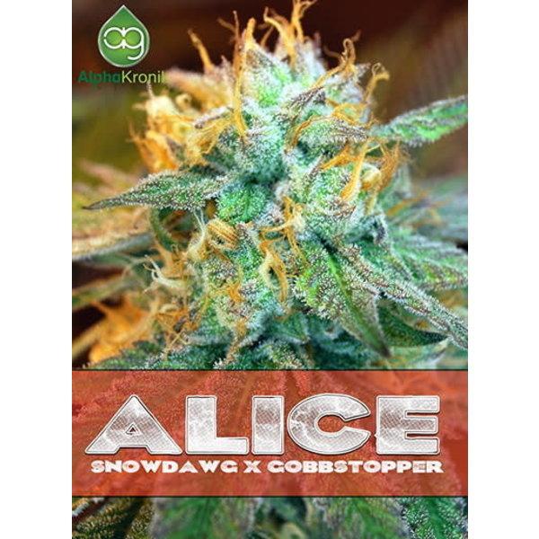 Alphakronik Alphakronik Alice Reg 5 pk