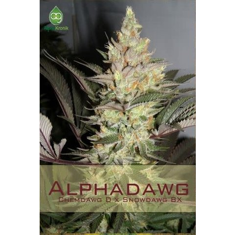 Alphakronik Alphadawg Reg 10 pk