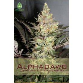 Alphakronik Alphadawg Reg 5 pk