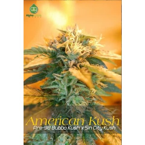 American Kush Reg 10 pk