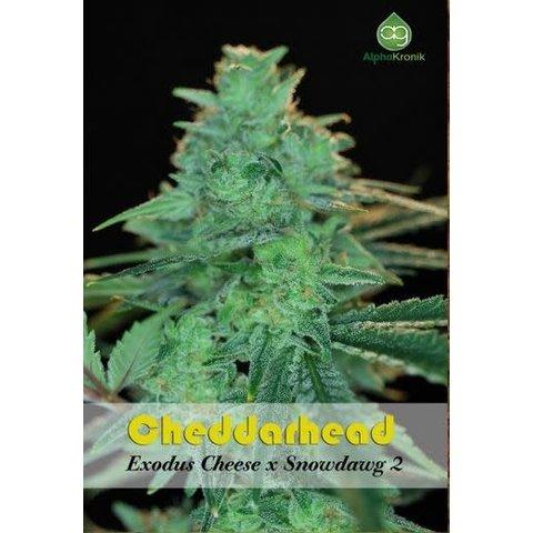 Cheddarhead Reg 5 pk