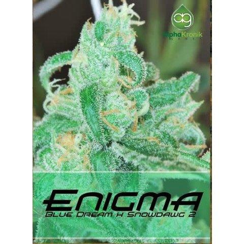 Enigma Reg 5 pk