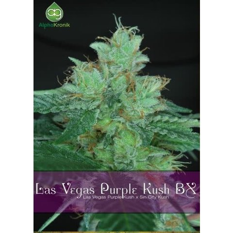 Alphakronik Las Vegas Purple Kush BX Reg 10 pk