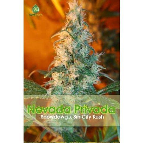 Nevada Privada Reg 5 pk