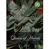 Alphakronik Queen of Hearts 5 pack