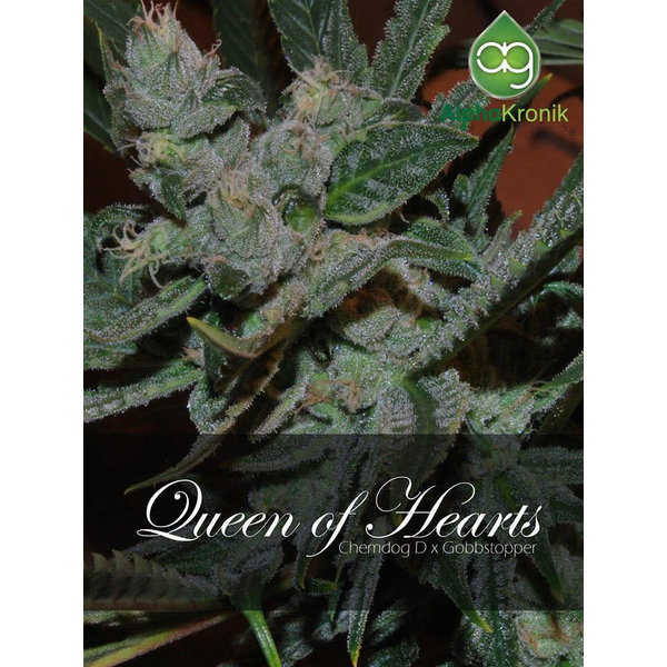 Alphakronik Alphakronik Queen of Hearts Reg 10 pk