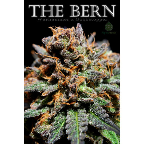 The Bern Reg 10 pk