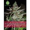 Tillamook Strawberry Reg 10 pk