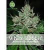 White Rabbit Reg 5 pk