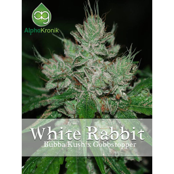 Alphakronik Alphakronik White Rabbit Reg 5 pk