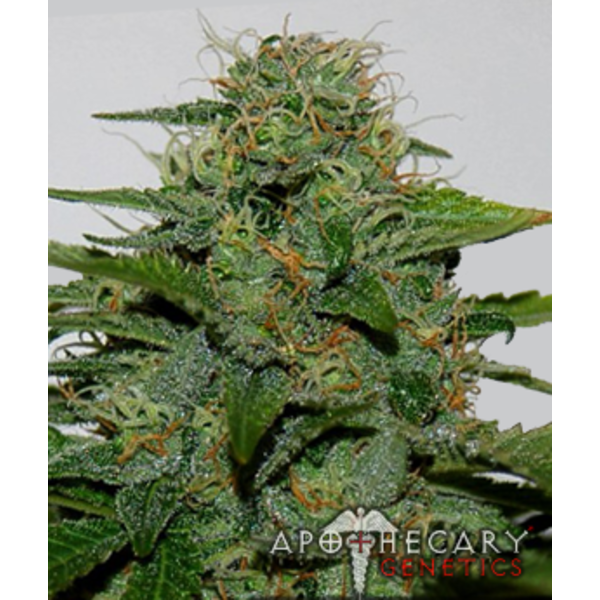 Apothecary Apothecary Earth OG Reg 10pack